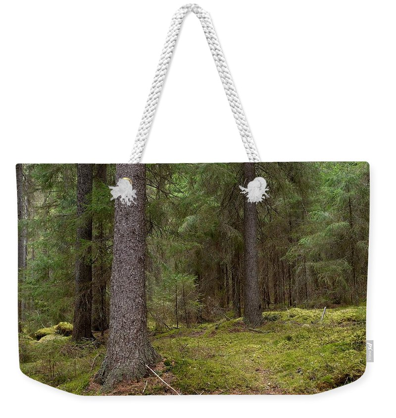 Lehtokukka Weekender Tote Bag featuring the photograph Spruce Forest by Jouko Lehto