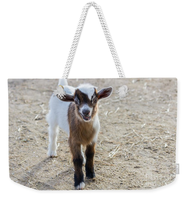 Big Cat Habitat Weekender Tote Bag featuring the photograph Spunky by Liesl Walsh