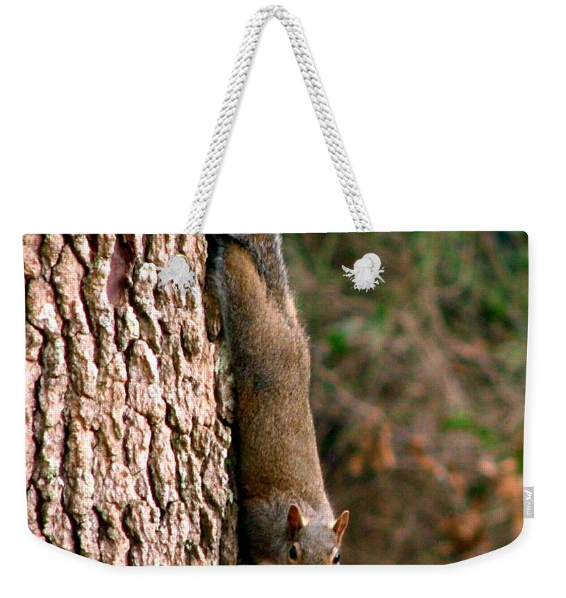 Squirrel Weekender Tote Bag featuring the photograph Squirrel 6 by J M Farris Photography