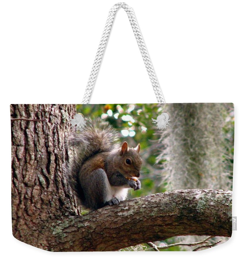Squirrel Weekender Tote Bag featuring the photograph Squirrel 7 by J M Farris Photography