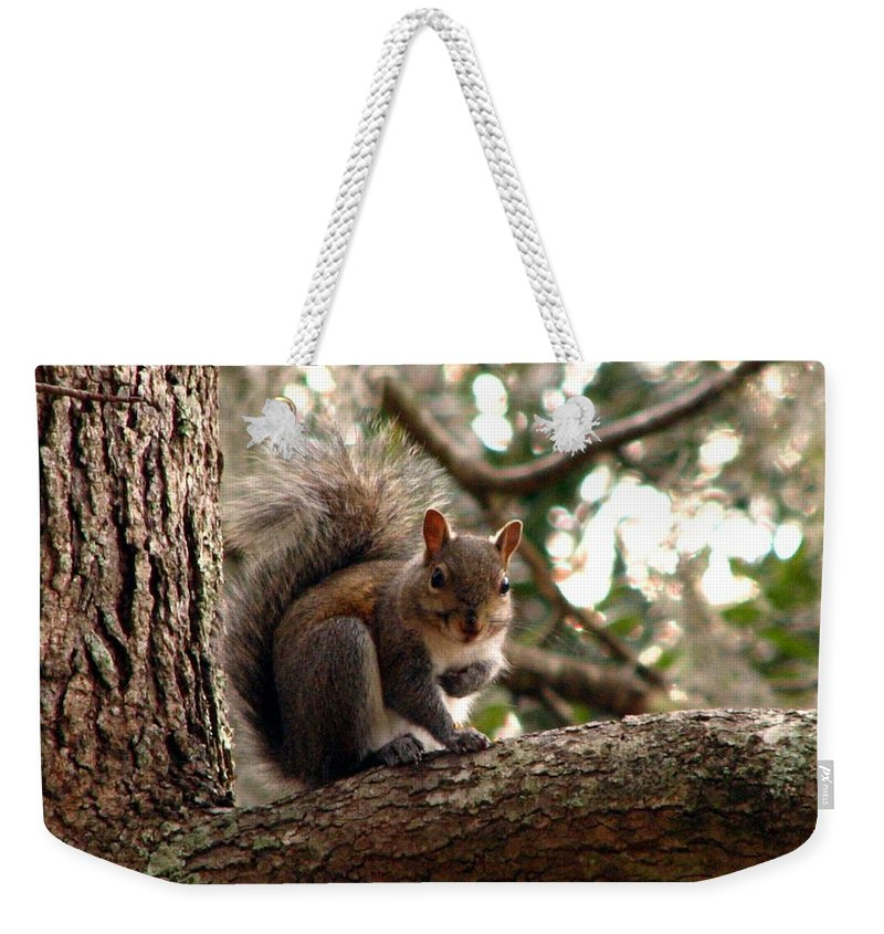 Squirrel Weekender Tote Bag featuring the photograph Squirrel 8 by J M Farris Photography