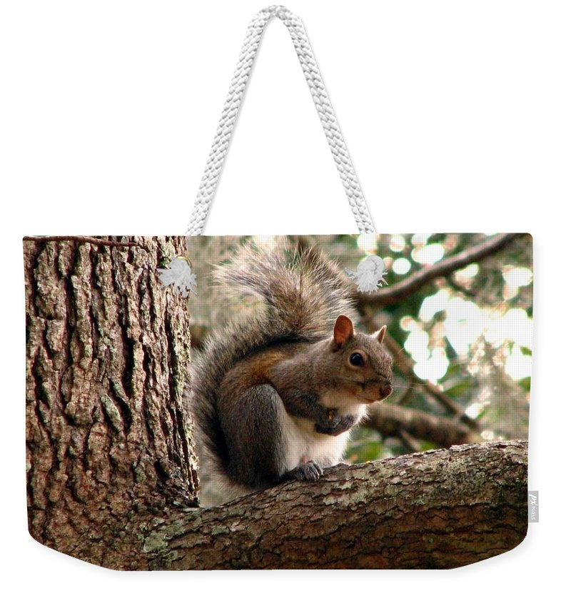 Squirrel Weekender Tote Bag featuring the photograph Squirrel 9 by J M Farris Photography