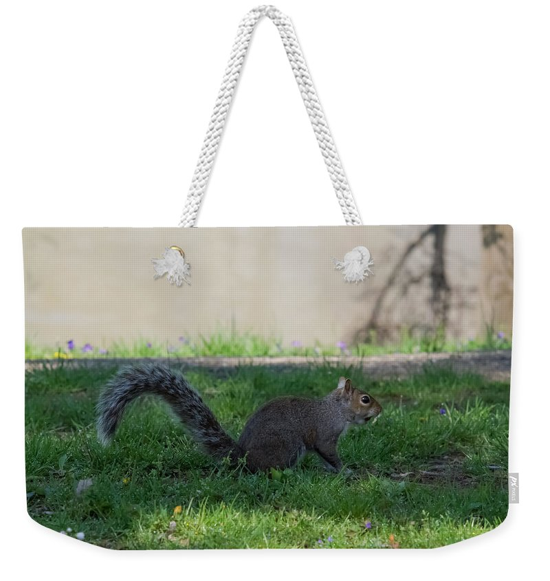 Squirrel Weekender Tote Bag featuring the photograph Squirrel At A Stand Still by Jan M Holden