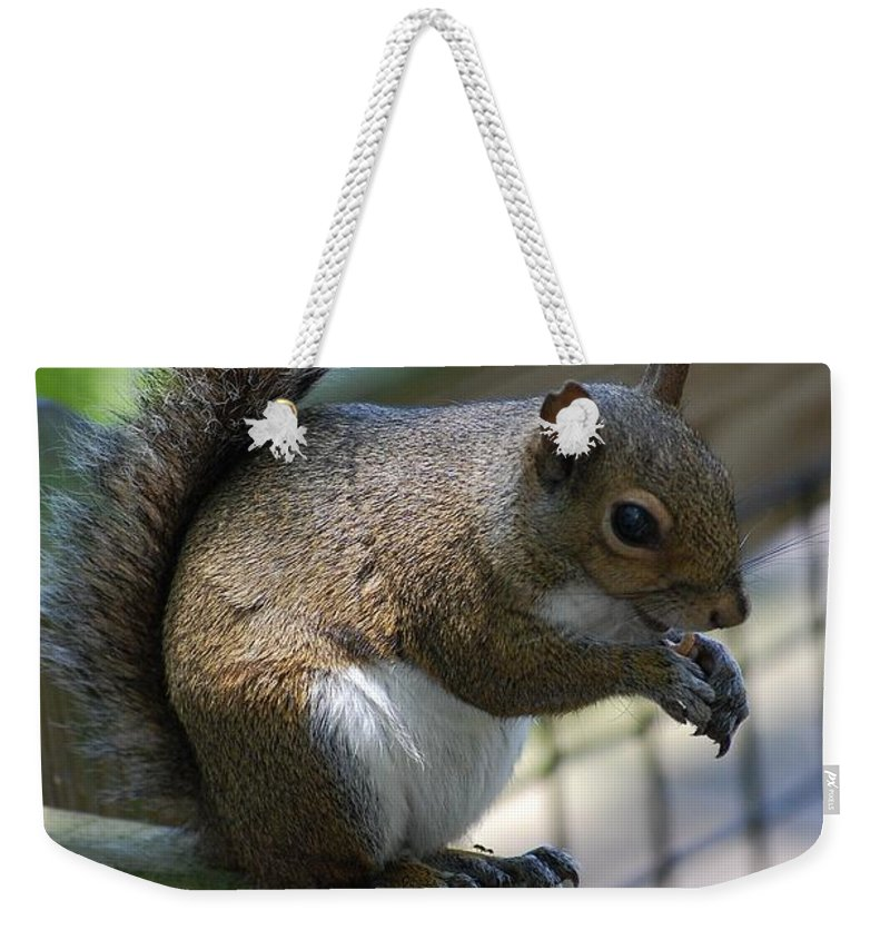 Squirrel Weekender Tote Bag featuring the photograph Squirrel II by Robert Meanor