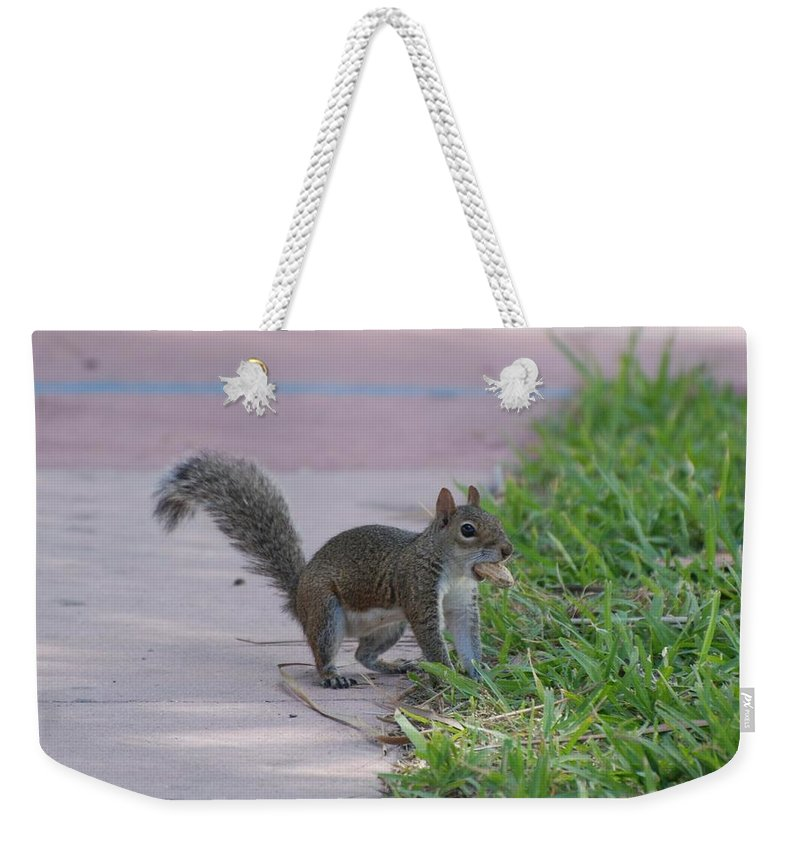 Squirrels Weekender Tote Bag featuring the photograph Squirrel Nuts by Rob Hans
