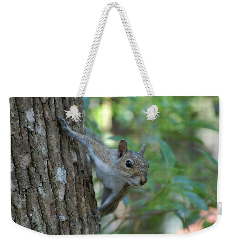Squirrel Weekender Tote Bag featuring the photograph Squirrel by Robert Meanor