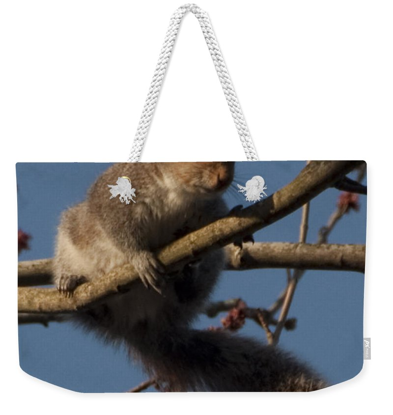 Squirrel Weekender Tote Bag featuring the photograph Squirrel by Steven Natanson