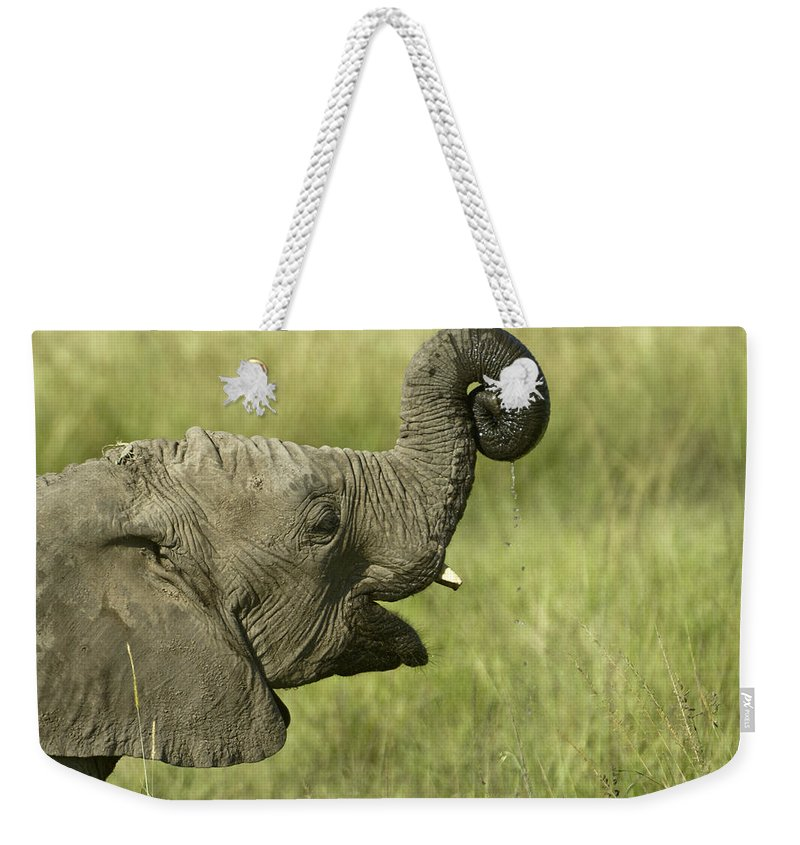 Africa Weekender Tote Bag featuring the photograph Squirting Water by Michele Burgess