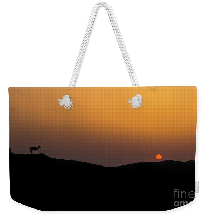 Sunset Weekender Tote Bag featuring the photograph Stag Silhouette by Shaun Wilkinson