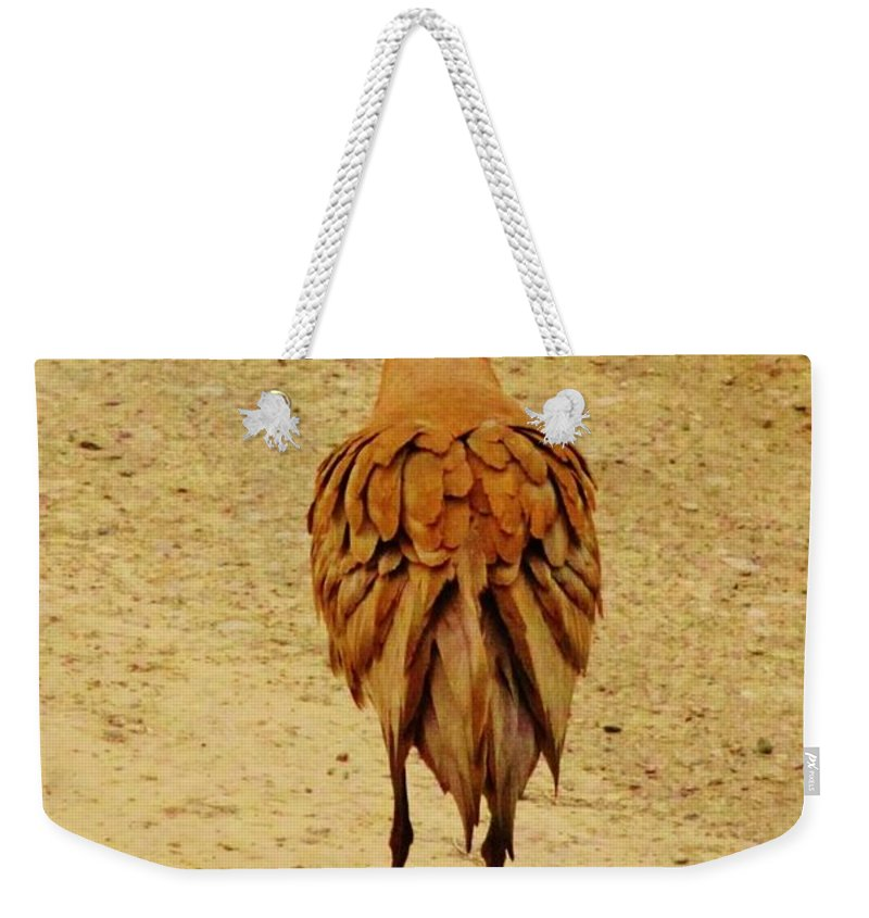 Dancing Sand Hill Crane Weekender Tote Bag featuring the photograph Stage Left by Lori Mahaffey