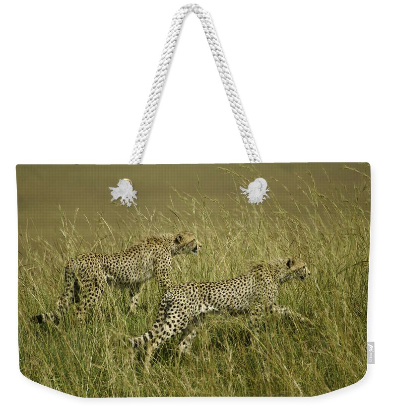 Africa Weekender Tote Bag featuring the photograph Stalking Cheetahs by Michele Burgess