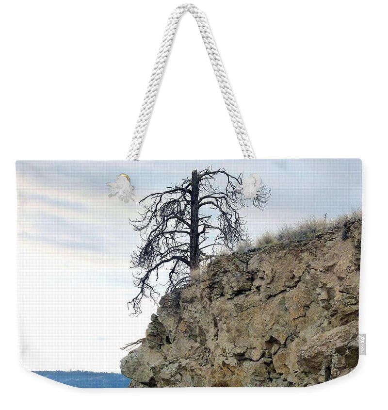 Pine Tree Weekender Tote Bag featuring the photograph Stalwart Pine Tree by Will Borden