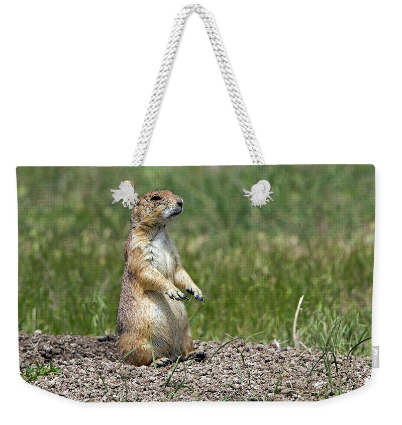 Prairie Dog Weekender Tote Bag featuring the photograph Standing Guard by Ira Marcus