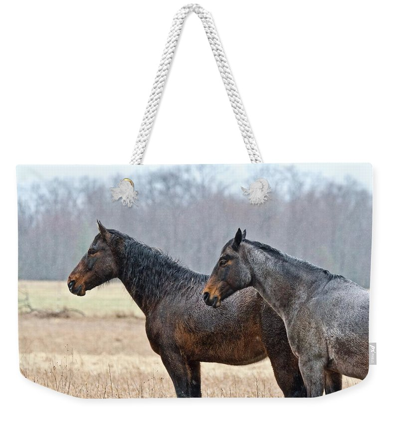 Horse Weekender Tote Bag featuring the photograph Standing In The Rain 1281 by Michael Peychich
