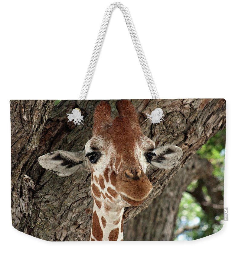 Giraffe Weekender Tote Bag featuring the photograph Standing Tall by Douglas Barnard