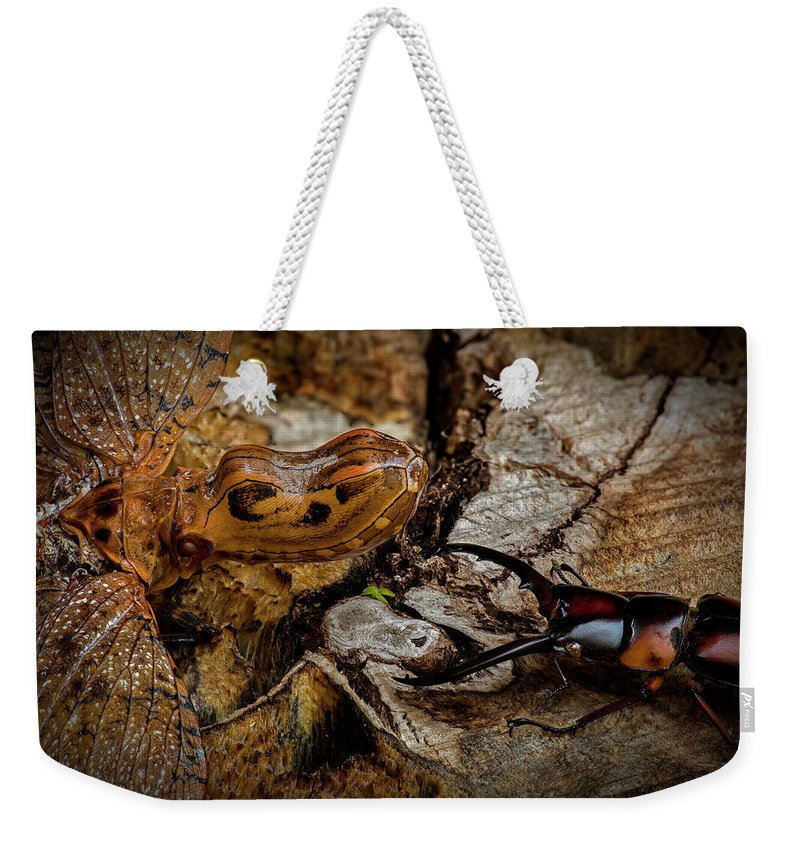 Macro Weekender Tote Bag featuring the photograph Standoff by Robert Storost