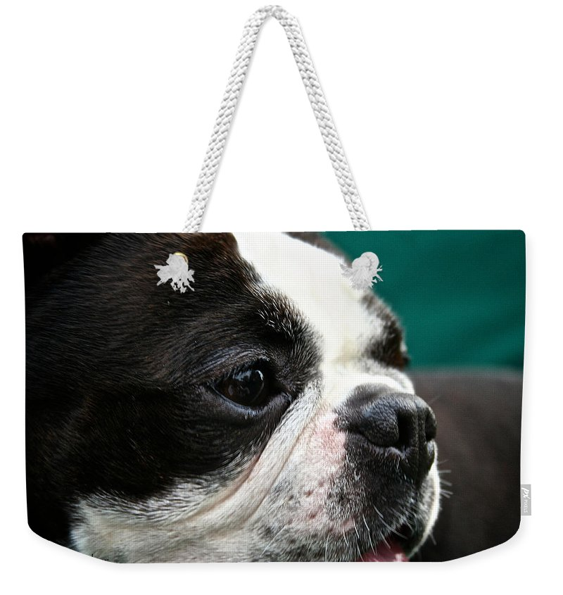 Animal Weekender Tote Bag featuring the photograph Stanley's Head Study by Susan Herber