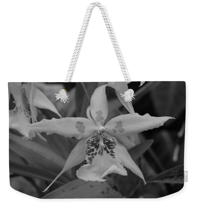Macro Weekender Tote Bag featuring the photograph Star Flower by Rob Hans