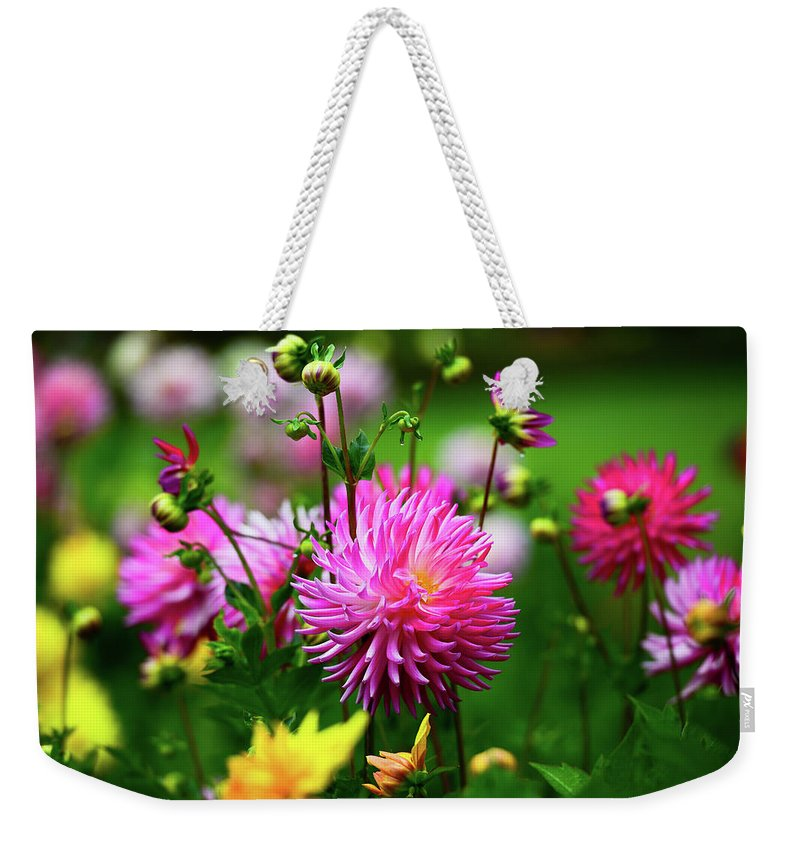 Dahlia Garden Flower Dahlias Flowers Spring Bloom Weekender Tote Bag featuring the photograph Star Of The Show by Clyn Robinson