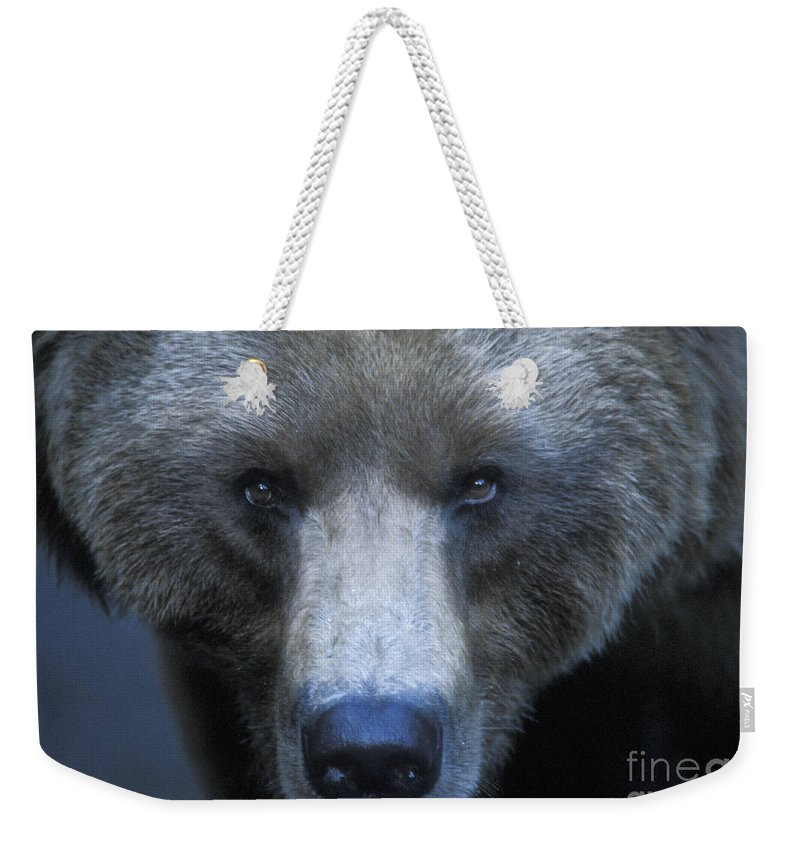 Yellowstone Weekender Tote Bag featuring the photograph Stare Down by Sandra Bronstein