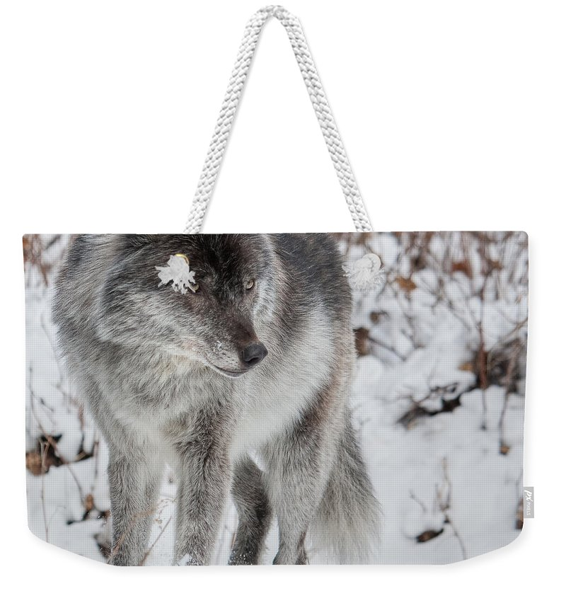 Wild Weekender Tote Bag featuring the photograph Staredown by Colette Panaioti