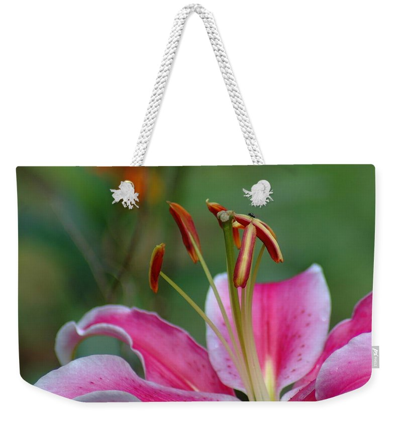 Lilies Weekender Tote Bag featuring the photograph Stargazer Lily by Teresa Stallings