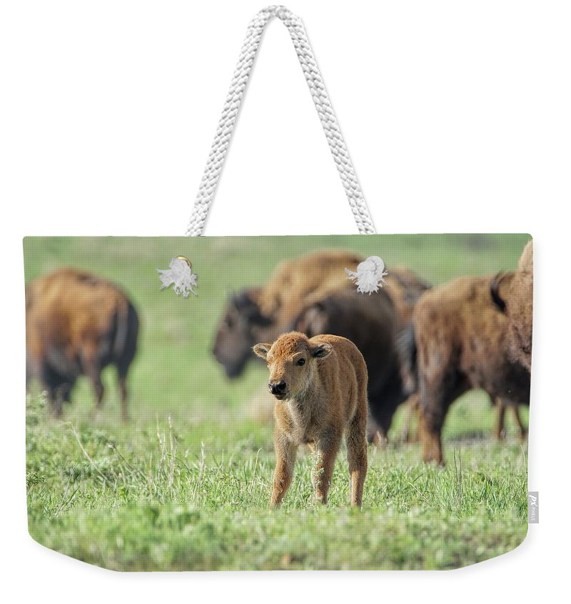 Bison Weekender Tote Bag featuring the photograph Staring Contest by Alan Hutchins