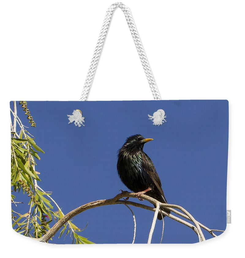 Jean Noren Weekender Tote Bag featuring the photograph Starling by Jean Noren