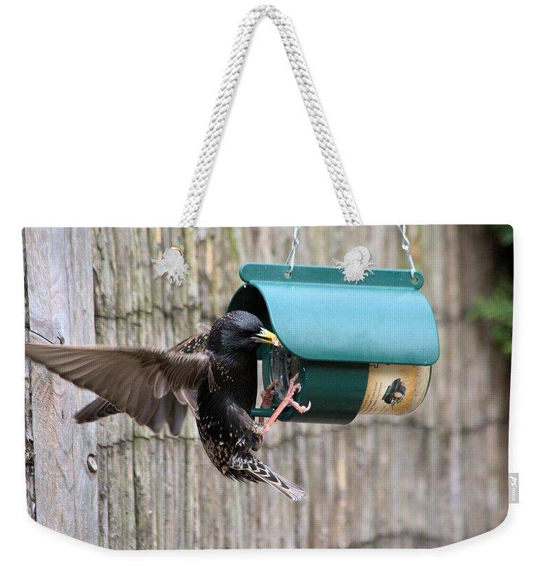 Starling On Bird Feeder Weekender Tote Bag featuring the photograph Starling On Bird Feeder by Gordon Auld