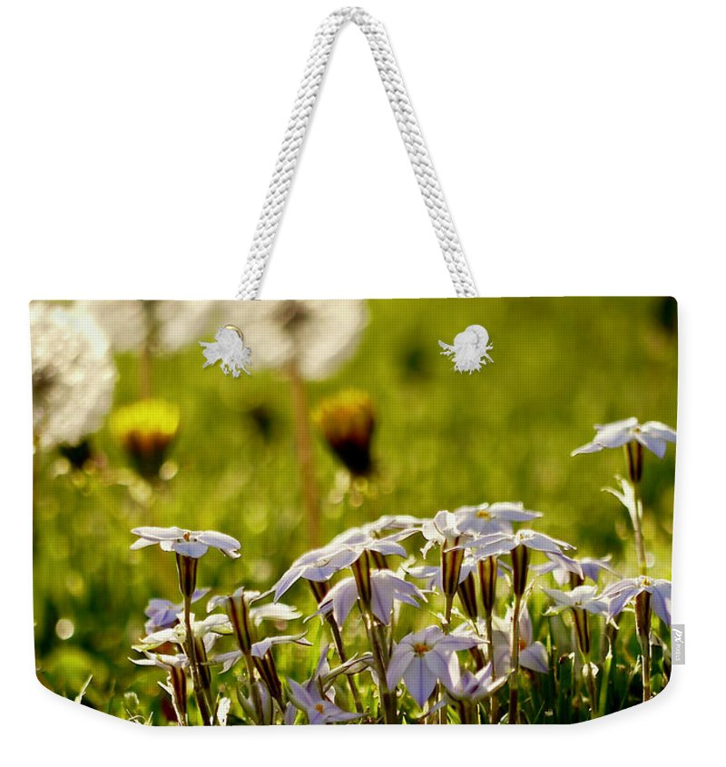 Star Flower Weekender Tote Bag featuring the photograph Stars And Dandelions by Rachel Morrison