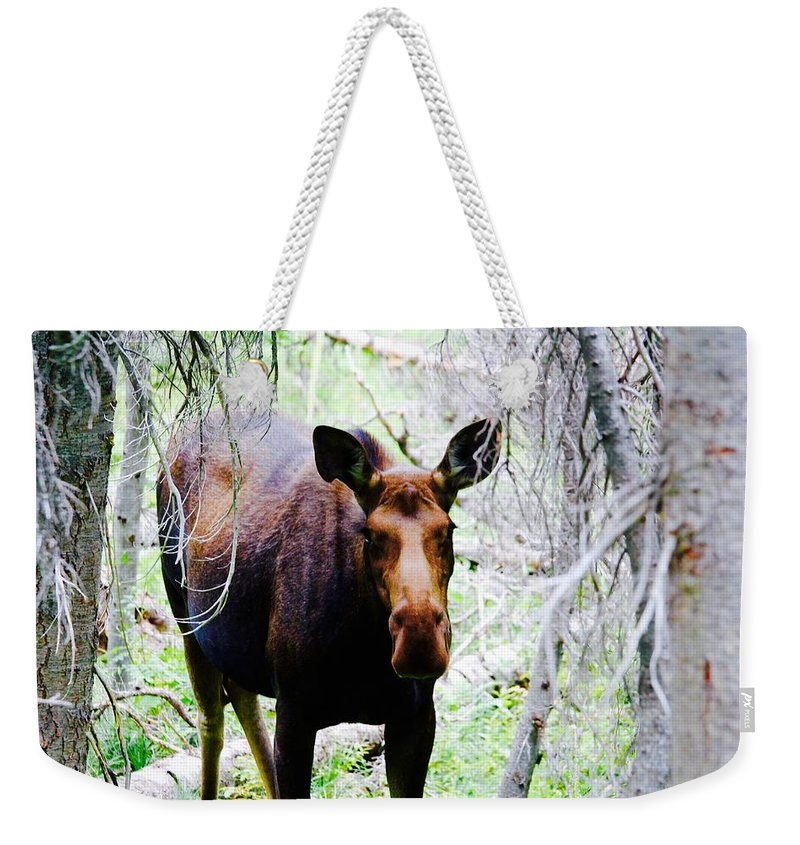 Weekender Tote Bag featuring the photograph Stay Away From My Calf by Matthew Justis