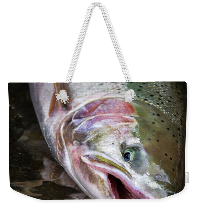 Fishing Weekender Tote Bag featuring the photograph Steelhead 1 by Jason Brooks
