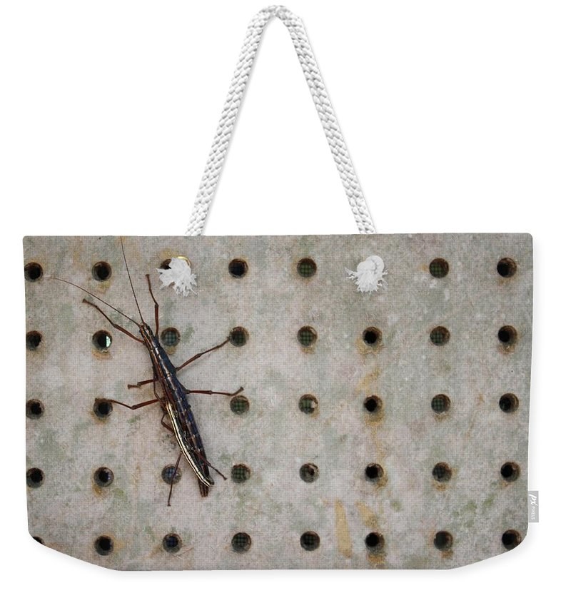 Stick Bug Weekender Tote Bag featuring the photograph Sticks And Circles by Mandy Shupp