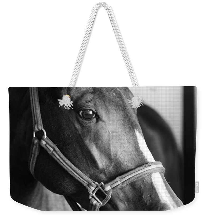 Horse Weekender Tote Bag featuring the photograph Horse And Stillness by Marilyn Hunt
