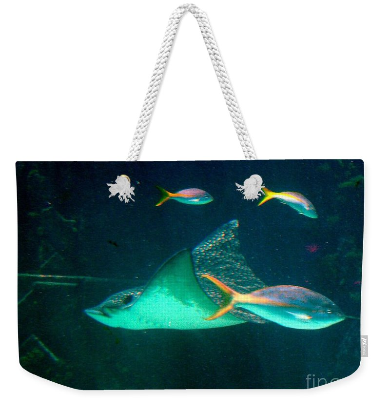 Aquarium Weekender Tote Bag featuring the photograph Sting Ray by Gary Wonning