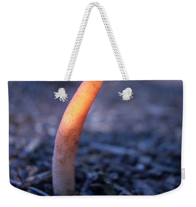 Cumberland Weekender Tote Bag featuring the photograph Stinkhorn Rising by Douglas Barnett