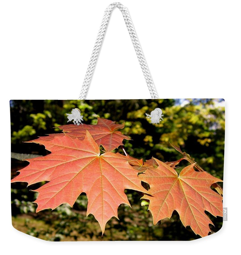 Spring Weekender Tote Bag featuring the photograph Strange Phenomenon by Will Borden