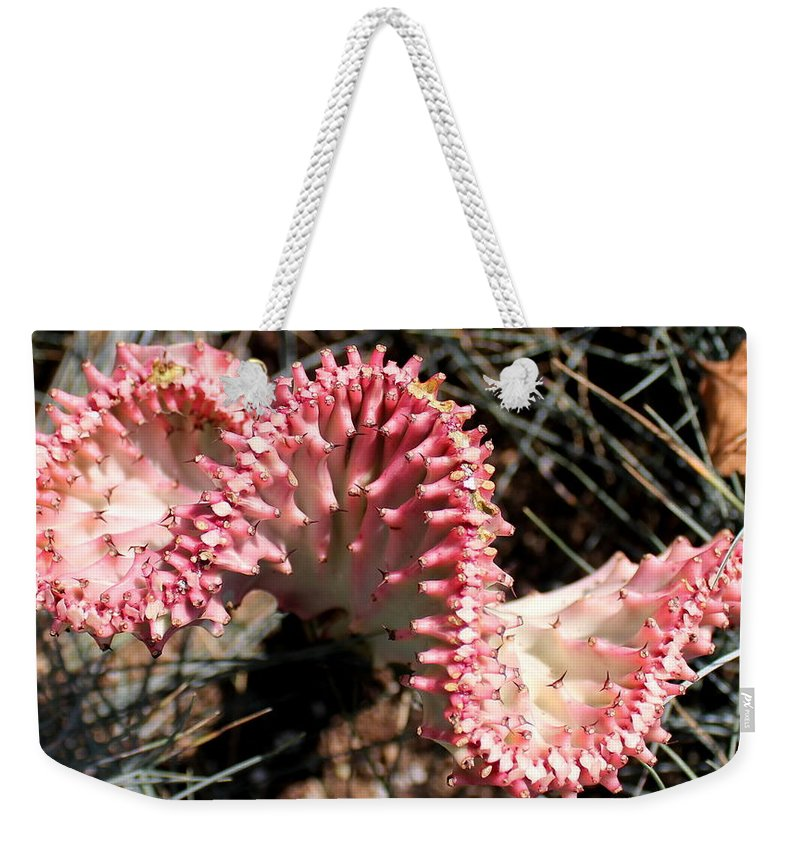 Pastel Weekender Tote Bag featuring the photograph Strange Succulent by Deborah Crew-Johnson