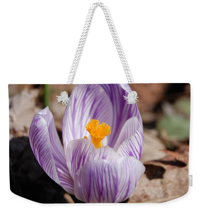 Digital Photography Weekender Tote Bag featuring the photograph Striped Crocus by David Lane