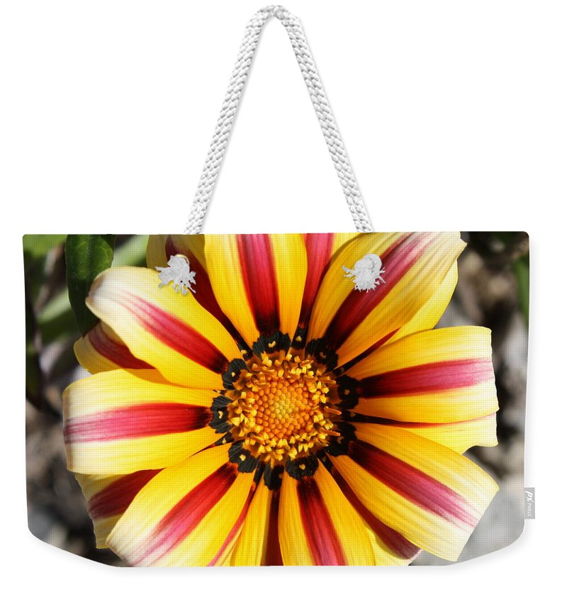 Nature Weekender Tote Bag featuring the photograph Striped Daisy Square by Carol Groenen