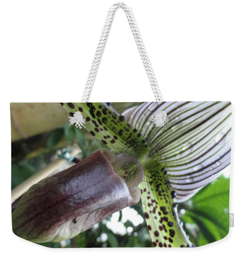 Orchid Weekender Tote Bag featuring the photograph Stripes Or Solids by Trish Hale