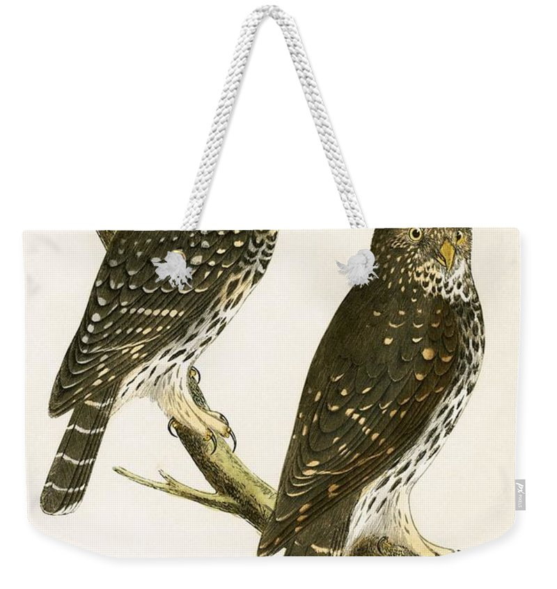 Bird Weekender Tote Bag featuring the painting Strix Pusilla by English School