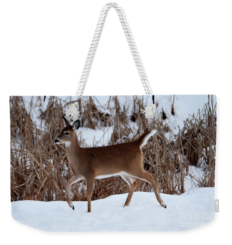 Deer Weekender Tote Bag featuring the photograph Strolling Along by Lori Tambakis