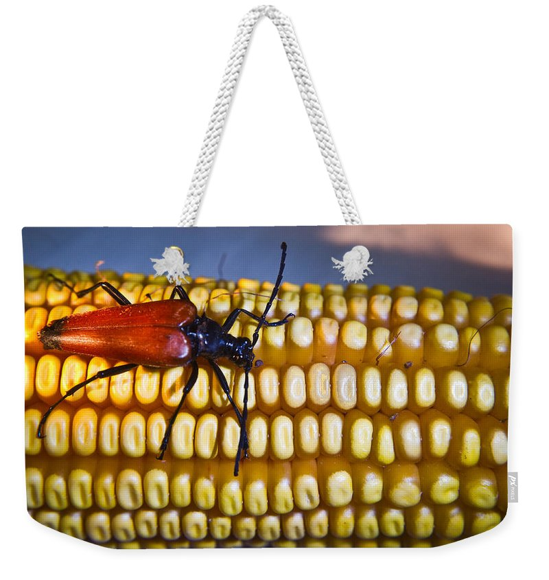 Ear Weekender Tote Bag featuring the photograph Strolling Along The Ear by Douglas Barnett