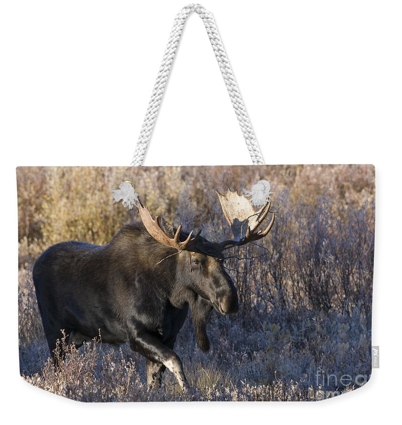 Grand Teton National Park Weekender Tote Bag featuring the photograph Strolling Through The Willows by Sandra Bronstein