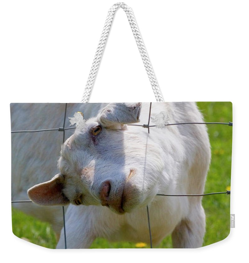 Goat Weekender Tote Bag featuring the photograph Stuck by Mike Dawson