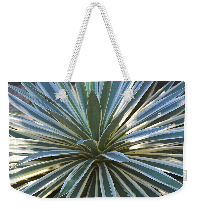 Agave Weekender Tote Bag featuring the photograph Stunning Agave Plant by Carol Groenen