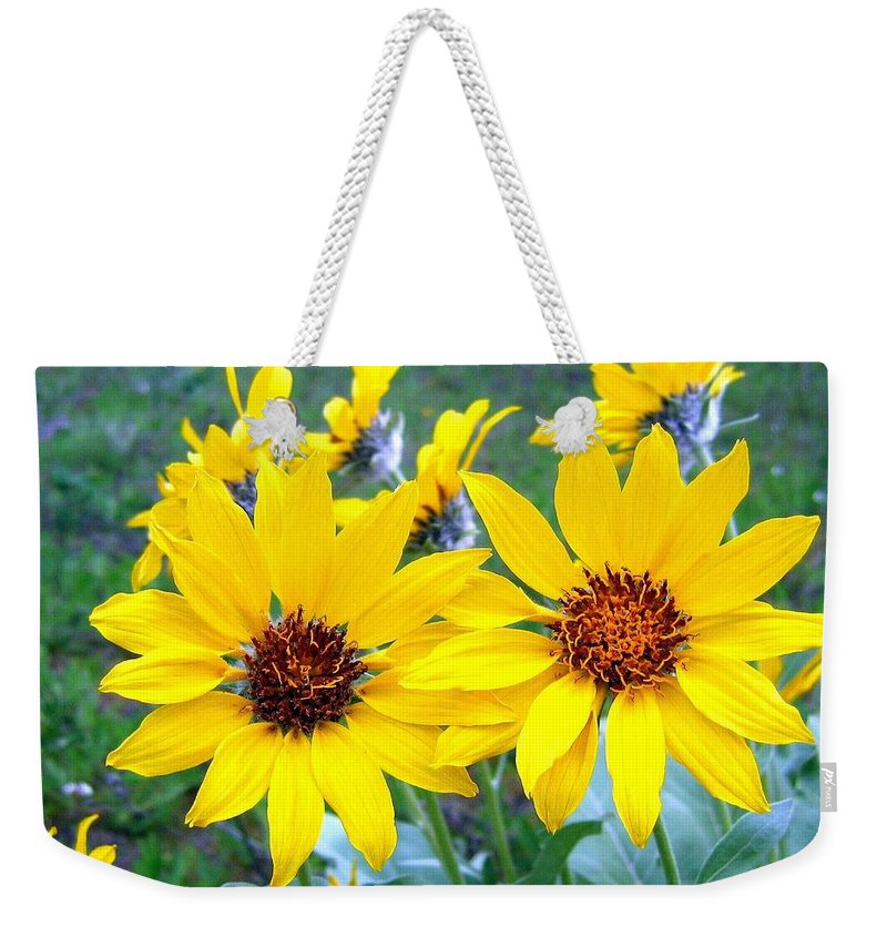 Sunflowers Weekender Tote Bag featuring the photograph Stunning Wild Sunflowers by Will Borden