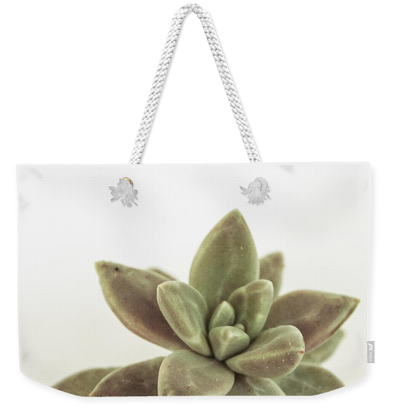 Succulents Weekender Tote Bag featuring the photograph Succulents Flowers Colour by Ana Martinez