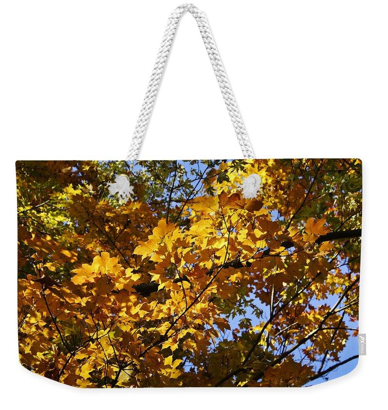 Sugar Weekender Tote Bag featuring the photograph Sugar Maple by Teresa Mucha